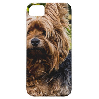 Funda Para iPhone SE/5/5s Perro casero de Yorkshire Terrier