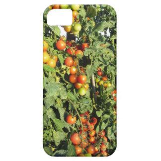 Funda Para iPhone SE/5/5s Plantas de tomate que crecen en el jardín