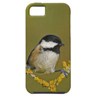 Funda Para iPhone SE/5/5s Reclinación del pájaro del Tit del carbón