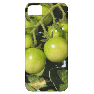 Funda Para iPhone SE/5/5s Tomates verdes que cuelgan en la planta en el
