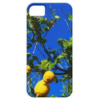 Funda Para iPhone SE/5/5s Tres limones sicilianos