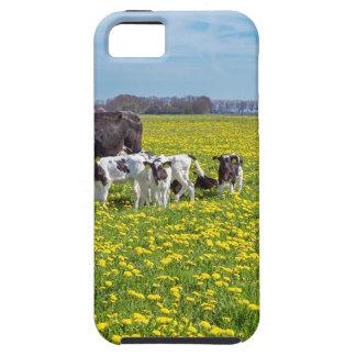 Funda Para iPhone SE/5/5s Vaca con los becerros que pastan en prado con los