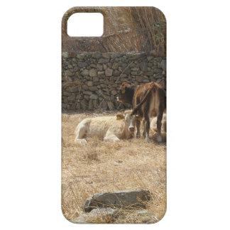 Funda Para iPhone SE/5/5s Vacas