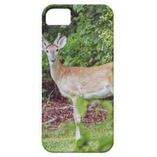 Funda Para iPhone SE/5/5s Young Buck en terciopelo