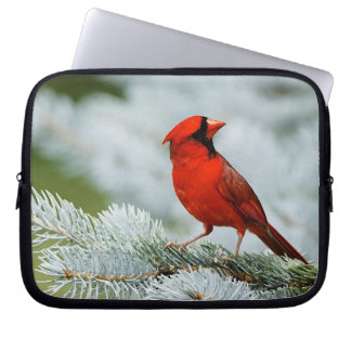 Funda Para Portátil Bird red_funda