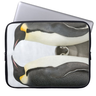 Funda Para Portátil Pingüinos de emperador con el polluelo - caja del