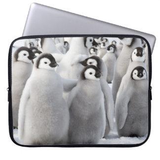Funda Para Portátil Polluelos del pingüino de emperador - caja del