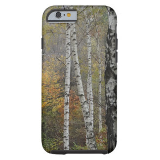 Funda Resistente iPhone 6 iPhone 6/6s de la foto del bosque del abedul, duro