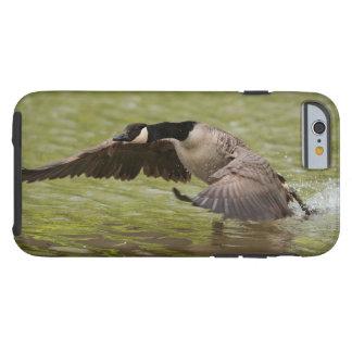 Funda Resistente Para iPhone 6 Aterrizaje del ganso de Canadá en agua