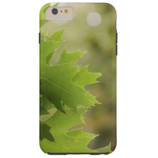Funda Resistente Para iPhone 6 Plus Hojas del roble