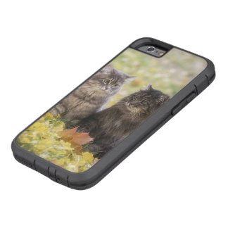Funda Tough Xtreme Para iPhone 6 Gatos