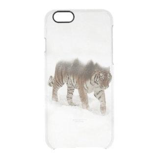 Funda Transparente Para iPhone 6/6s Exposición-fauna tigre-Tigre-doble siberiana