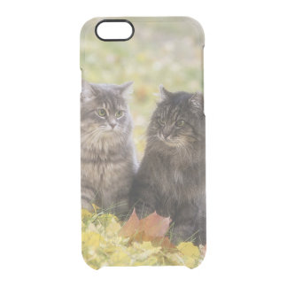 Funda Transparente Para iPhone 6/6s Gatos