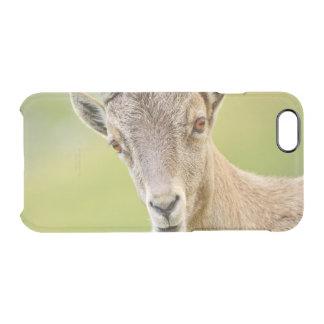 Funda Transparente Para iPhone 6/6s Retrato de un cabra montés