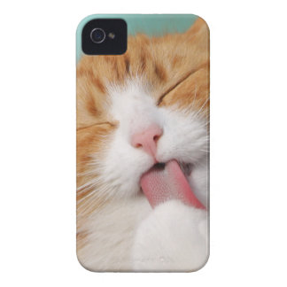 Funny hilarious silly cat carcasa para iPhone 4 de Case-Mate