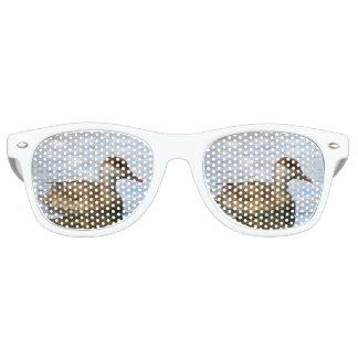 Gafas De Fiesta Retro Pato femenino del pato de mar, rufina del netta