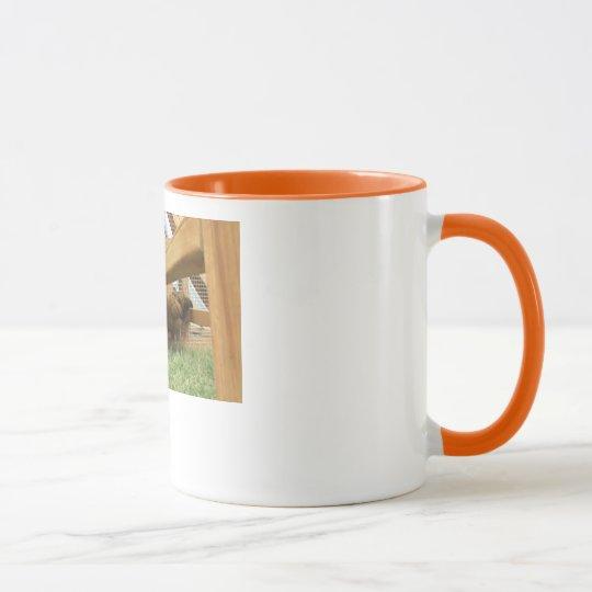 Gallinas jovenes felices en su nueva taza de café