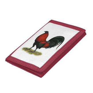 Gallo americano del rojo del negro del BB del