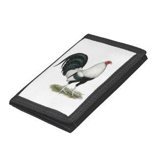 Gallo de pelea de plata de Duckwing