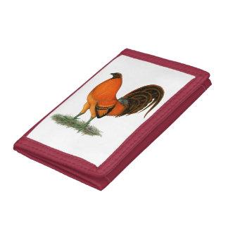 Gallo del rojo del jengibre del gallo de pelea