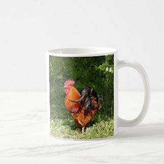 Gallo hermoso taza de café