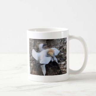 Gannets en la exhibición del cortejo taza clásica