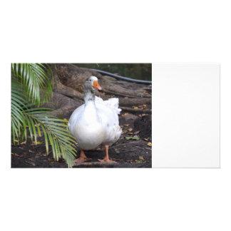 Ganso blanco que coloca las frondas cercanas tarjeta con foto personalizada