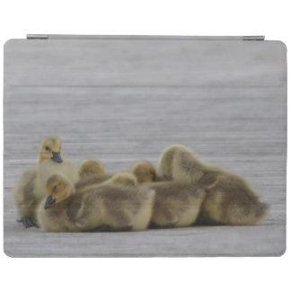 Gansos animales de Canadá del pájaro Cover De iPad
