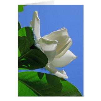 Gardenia hawaiano tarjeta de felicitación
