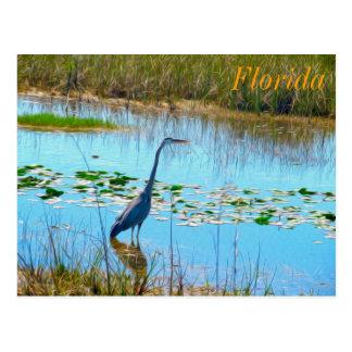 Garza azul en postal de los claros - la Florida