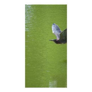 Garza verde en Mid Air Tarjetas Fotográficas