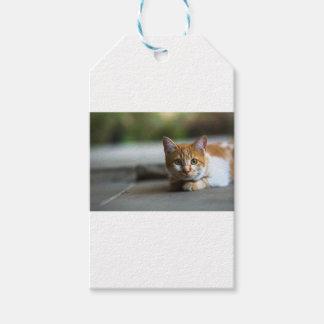 Gatito anaranjado del tabby etiquetas para regalos
