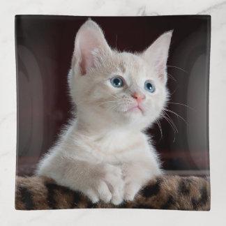 Gatito blanco observado azul