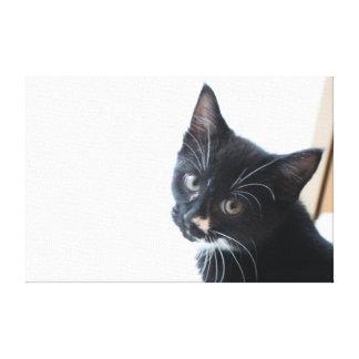Gatito blanco y negro lienzo