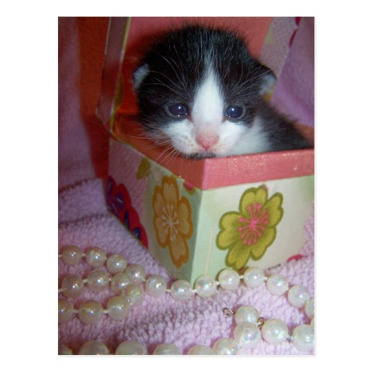 gatito de 2 semanas postal