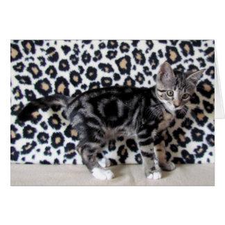 Gatito de Camo que protagoniza a Lilo Tarjeta