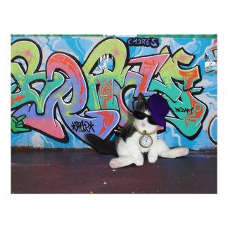 Gatito de la actitud del gato ..... y pared de la  flyer a todo color