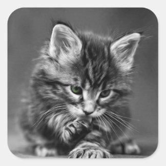 Gatito de ojos verdes colcomanias cuadradas
