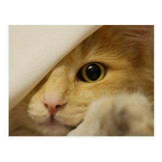 Gatito del escondite debajo de la manta postal