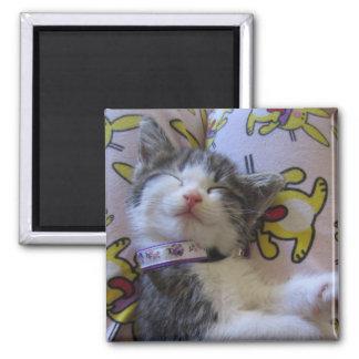 gatito del Panal-tiempo Imán Cuadrado