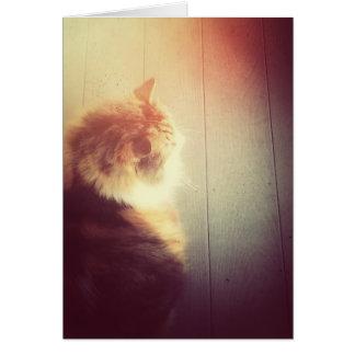 Gatito deseoso tarjeta de felicitación