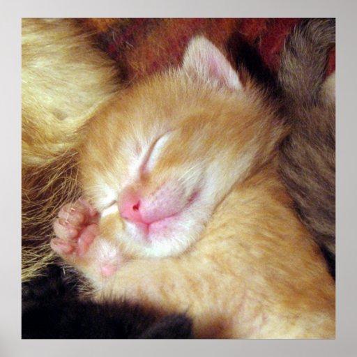Gatito dormido poster