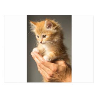 Gatito dulce en buena mano postal