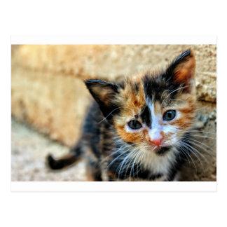 Gatito dulce que le mira postal