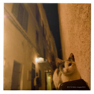 Gatito en la oscuridad, Marruecos Azulejo Cuadrado Grande