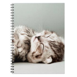 gatito, gato, gato de tabby lindo, gatos lindos, cuaderno