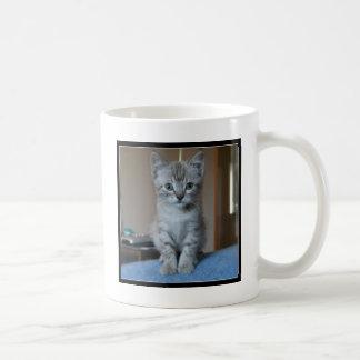 Gatito gris del Tabby Taza De Café