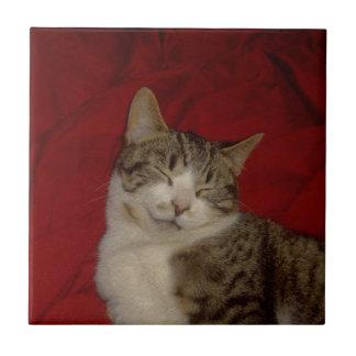 Gatito gris en rojo azulejo cuadrado pequeño