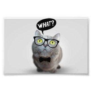 Gatito lindo del gato con los vidrios qué cita div impresión fotográfica