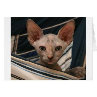 Gatito lindo del sphynx de los objetos curiosos tarjeta